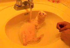 The Only Thing Better Than Taking A Bath: Adorable Animals Taking Baths by imgur.com