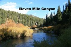 Eleven Mile Canyon Near Lake George Colorado My