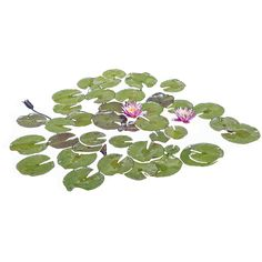 Lily pads floating in a pond with some bright purple flowers growing from them.