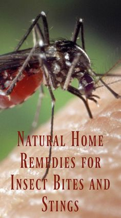 Natural Home Remedies for Insect Bites and Stings #Home #Health