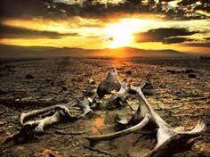 MadalBo: Cómo arruinó la humanidad la lucha contra el cambi...