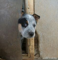 """Never letting this puppy watch """"The Shining"""""""