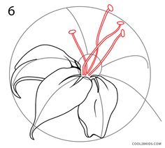 how to draw a lily step 6