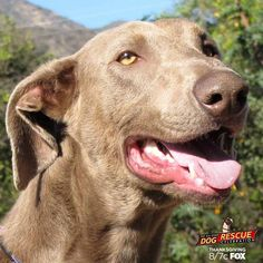 Watch The #AllStarDogRescue Celebration this Thanksgiving at 8/7c and learn how to adopt Khyber!