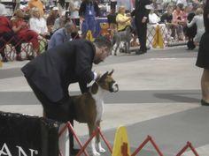 Alamance Kennel Club Dog Show - Alamance Kennel Club, Inc