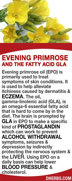 Evening primrose oil (EPO) is primarily used to treat skin conditions. It helps alleviate itchiness caused by dermatitis & eczema. The oil, gamma-linolenic acid (GLA), is an omega-6 essential fatty acid that is hard to come by in the diet. The brain is prompted by GLA to make a specific kind of prostaglandin which can work to prevent alcohol withdrawal symptoms, seizures & depression by indirectly protecting the nervous system & the liver. Using EPO daily can help lower BP & cholesterol…