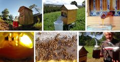 Collect the honey without opening the hive. It's is so much easier on the beekeeper and so much easier on the bees. Beekeeping For Beginners, Raising Bees, Down On The Farm, Bees Knees, Queen Bees, Bee Keeping, Father And Son, Sustainable Living, Deco