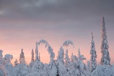 These photographs were taken in Saariselkä, Lapland, Finland between the and the of January. It is officially Kaamos (Polar Night) until March. Polar Night, Moomin, Finland, Sunrise, Behance, Lost, Mountains, Winter, Nature