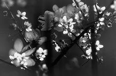Enjoy / Lucian Olteanu / Photographie, Numérique