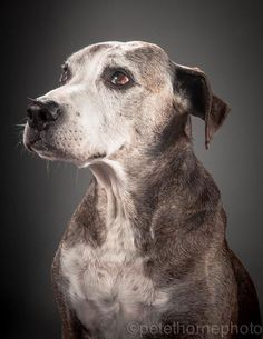 16 Touching Portraits of Really, Really Old Dogs by Pete Thorne