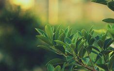 green-leafs.jpg