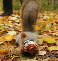 Hungry squirrel :)