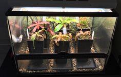 Build a Raspberry Pi controlled terrarium maintaining temp+humidity http://bennet.org/blog/raspberry-pi-terrarium-controller
