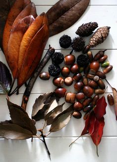 Autumn nuts, cones, leaves and seeds. Love the textures from bristles to smooth.