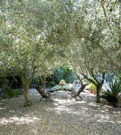 gemütliche gesellige Abende unter den Olivenbäumen im Garten