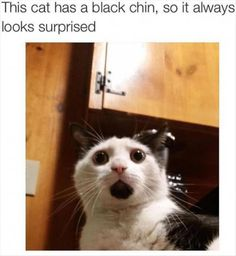 32 Cat Memes To Guarantee You Have A Fabulous And Pawsitive Caturday! is part of Funny - 32 Cat Memes To Guarantee You Have A Fabulous And Pawsitive Caturday! World's largest collection of cat memes and other animals Funny Animal Memes, Funny Cat Videos, Cute Funny Animals, Funny Animal Pictures, Cute Baby Animals, Funny Cute, Cute Cats, Funny Memes, Memes Humor