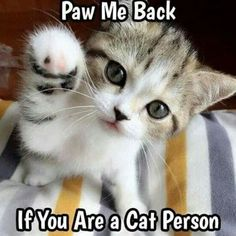 Paw me Back If you are a cat person