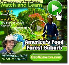 America's Forgotten Food Forest Suburb Rediscovered! Davis, California