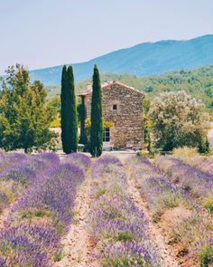 Want to know which towns and villages in Provence are worth visiting? Photographer Mary Quincy gives her guide to the most beautiful towns in Provence Places To Travel, Places To See, Valensole, Provence France, French Countryside, Menorca, Beautiful Places In The World, South Of France, Travel Aesthetic