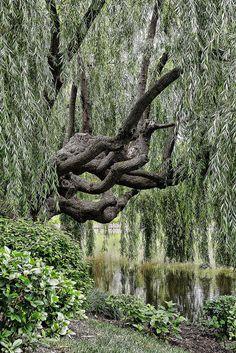 Glencoe's Chicago Botanic Garden10