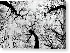 Tree woman. Canvas print by Ren Kuljovska. #blackandwhite #treelife #lifeoftrees #canvasprint #wallart Tree Woman, Canvas Art, Canvas Prints, Got Print, Canvas Material, Prints For Sale, Fine Art America, Trees, Artists