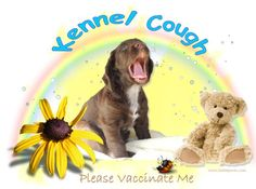 Kennel Cough  Please Vaccinate Me