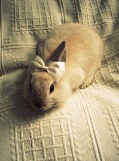 I want a bunny