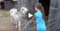 This little girl goes to see her donkey friend EVERY day, but when you hear the reaction from the donkey when he sees her, your heart will melt to pieces... It's TOO cute for words, what a wonderful and beautiful relationship!    Turn your volume up for everything, because this special moment has be