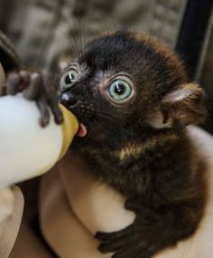 # animals #how cute is that so so so so so so so cute