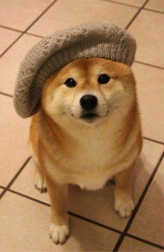 cute dog with beret
