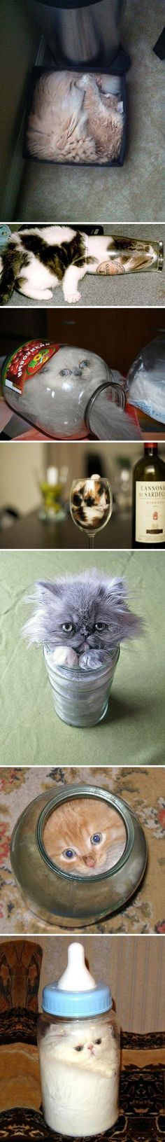Adorable liquid cats...