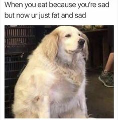 Lustige Tier Memes des Tages - 30 Bilder - Lovely Animals World . Funny Dog Memes, Funny Animal Memes, Cute Funny Animals, Memes Humor, Funny Dogs, Fat Memes, Humor Humour, Diet Humor, Animal Quotes