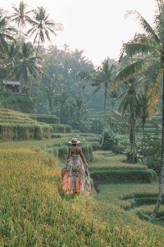 Tegalalang Rice Terraces, Ubud