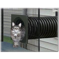 Walk-in SunCATcher Cat Cages, Cat Condos, Outdoor Cat Enclosures Tap the link Now - All Things Cats! - Treat Yourself and Your CAT! Stand Out in a Crowded World! Cage Chat, Cat Habitat, Outdoor Cat Enclosure, Reptile Enclosure, Cat Cages, Bird Cages, Outdoor Cats, Outdoor Cat Tunnel, Indoor Outdoor