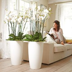 Use orchids, flowers and plants to decorate your home. Thirty five gorgeous ways to decorate with orchids, flowers, and plants. Indoor Floor Plants, Artificial Indoor Plants, Indoor Plants Low Light, Indoor Plant Pots, Best Indoor Plants, House Plants Decor, Office Plants, Interior Plants, Vases Decor