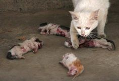 This is more heartbreaking. Poor mom and babies.  :(    People are so cruel.  I hate it!!!!