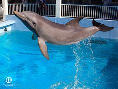 Adorable dolphin photos really don't get any better than Hopes! #CMAlife