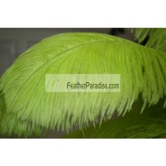 Lime Green Ostrich Feathers plumes Wholesale 16-18 inch 50 Pieces by dozen or in bulk For Wedding Centerpieces and Crafts, arts DIY stage and events decoration