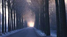 Winter mist at dawn in Holland, Schermer. #myroad