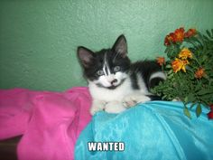WANTED! Stole two dogs! - http://unusual-cats.com/wanted-stole-two-dogs/