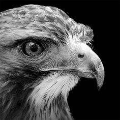 Lukas Holas presents us with unique animal portraits in black and white. His love and admiration for animals comes through every powerful close-up. Enhanced by beautiful lighting unveiling the incredible details, and intimate style of these animal portraits. A photo essay moving and powerful.