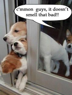 C'mon guys, it doesn't smell that bad.    Three dogs sticking their heads out a slightly opened sliding glass door and one dog standing inside looking at them.