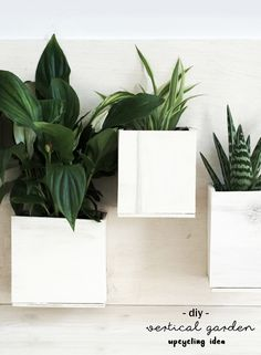 DIY Upcycling Idee Bild aus Pflanzen, hergestellt aus leeren Getränkekartons und Sperrholz | Holz | Do it yourself | Tetrapak | vertikaler Garten | grün | Sukkulenten | Urban Jungle Bloggers | basteln | Deko | Wand Begrünung | grüner Daumen | Nachhaltigkeit | nachhaltig | Recycling | Idee | Anleitung | Tutorial | kreativ | wood | Bild | Pflanzenbild | Geschenk | Geschenkidee | gift | plants | wall decoration | green | crafting | upcycling idea | handmade | selbstgemacht | beverage cartons |