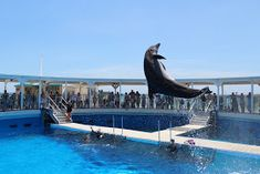 Gulfarium Marine Adventure Park~  Beach front marine park opens with new name& new attractions!    Visitors feed the penguins through one o...