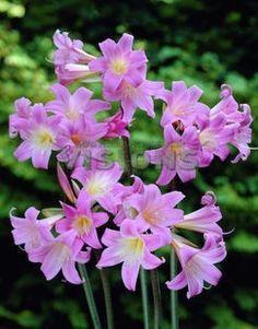 flores plantar primavera buscar con google