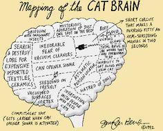 mapeando el cerebro de un gato