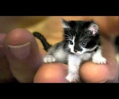 World's Smallest Cats