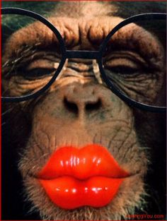 My what big lips you have my dear. Funny Animal Faces, Funny Animal Videos, Cute Funny Animals, Funny Animal Pictures, Funny Faces, Cute Baby Animals, Animals And Pets, Monkey Pictures, Laughing Animals