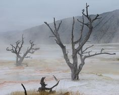 Canary Spring, Mammoth Hot Springs, Yellowstone National Park, Wyoming, September 13, 2007.