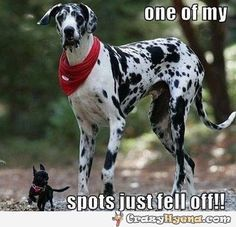 funny great dane quotes - Yahoo Image Search Results